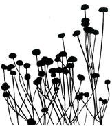 Field of Flowers, black