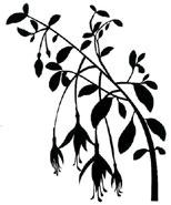 Fuchsia Branch, black