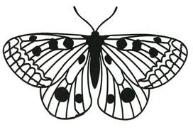 Majestic Moth stencil - Click Image to Close